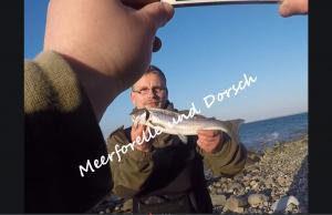 Meerforelle und Dorsch